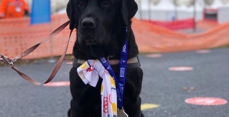 N Kolay Yarı Maratonu'nda Rehber Köpekler için Koştular