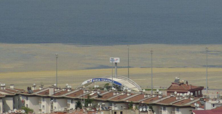 Mudanya sahillerin de deniz salyası