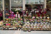 Bursa'da çiçek fiyatları! Anneler Günü öncesi mutlaka izleyin…