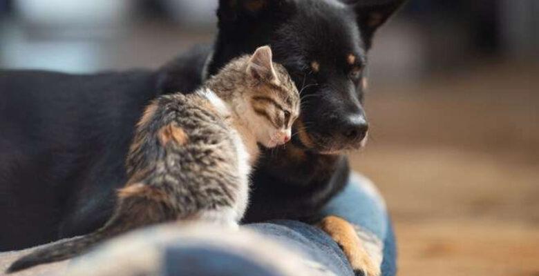 Hayvanları Koruma Kanunu'nda hangi maddeler var!