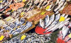 Balık sezonun açıldığı 1 Eylül ile birlikte müsilajın balıkçılığa ne kadar zarar verdiğini göreceğiz