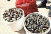 Diyanet'ten deniz ürünlerine yeniden açıklama geldi!